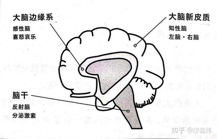 心理学和游戏设计(上):多巴胺与人类的游戏需求